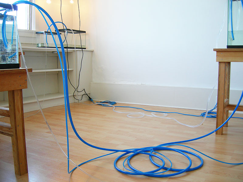 Image of filled fishtanks connected by blue tubes from WATER IS THE FIRST MEDICINE, art installation by Kennedy Telford.
